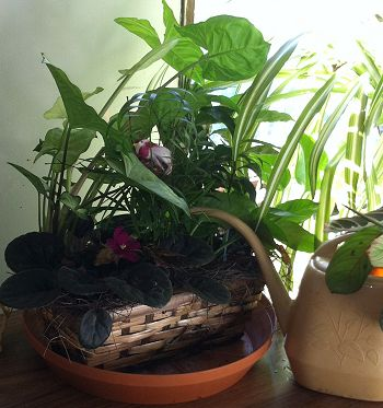 bringing nature inside with indoor plants